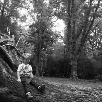 rhys sitting on tree may 2017